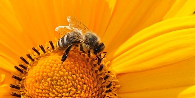 Aktionstag für Wildbienen